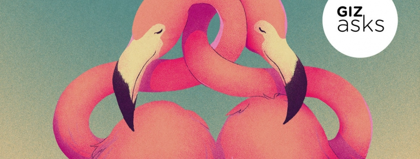 What's the Most Monogamous Animal?