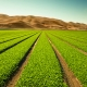 AcreTrader raises $5M to help people invest in a fruitful asset class: farmland