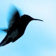 Biotherapeutics startup Hummingbird Bioscience brings its total Series B funding to $25 million