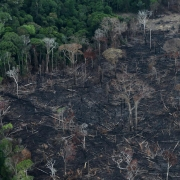 Global investors demand to meet Brazil diplomats over deforestation – Reuters India