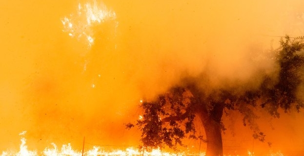 As the Western US burns, a forest carbon capture monitoring service nabs cash from Amazon & Bill Gates backed fund