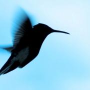 Biotherapeutics startup Hummingbird Bioscience brings its total Series B funding to $25 million