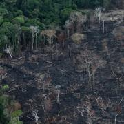 Global investors demand to meet Brazil diplomats over deforestation – Reuters India